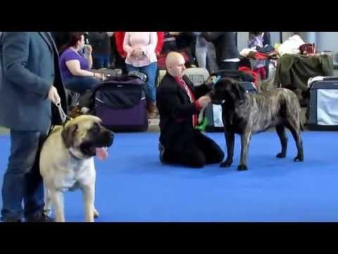 Brno Dual Cacib International Dog Show Czech Republic 07-08.02.2015