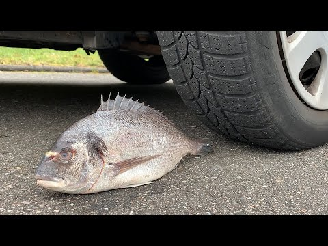 Crushing Crunchy & Soft Things by Car! - EXPERIMENT: CAR VS FISH