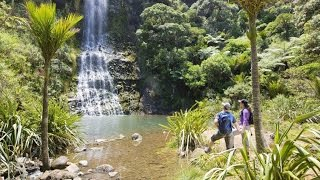 Auckland City and West Coast Luxury Tour - TIME Unlimited Tours