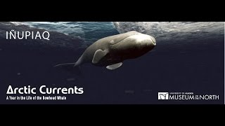This film (narrated in Inupiaq) presents the epic journey of bowhead whales as they make their annual migration across the Bering, Chukchi, and Beaufort Seas.