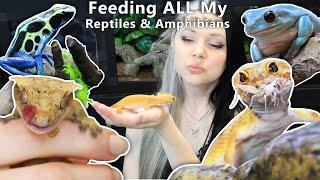Feeding ALL My Reptiles & Amphibians by Solid Gold Aquatics