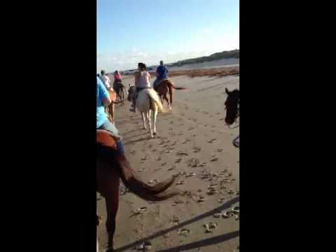 Padre Island Horseback riding