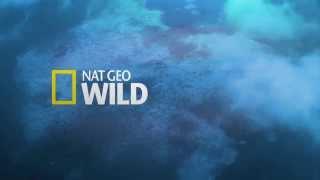 Sep 30, 2014 ... King Of TV Sat ... 2:26. Nat Geo Wild - Dinosaurs Predators Of The Deep - nNational Geographic ... Nat Geo Wild HD Europe - Amazing Adverts!