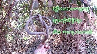 Khmer  - Prasat Bayon 1