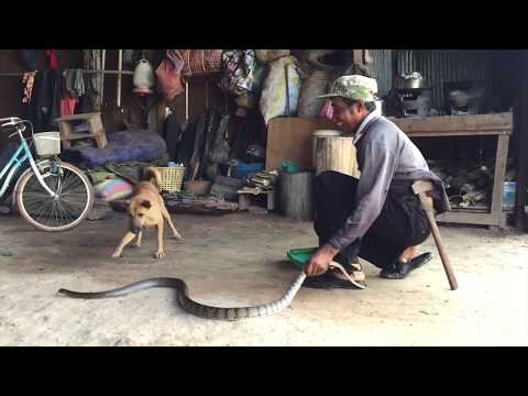 Amazing Catch Snake In Cambodia