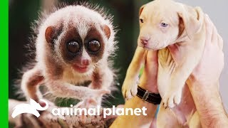 Meet Some Of Animal Planet's Most Adorable Baby Animals! (Compilation) by Animal Planet