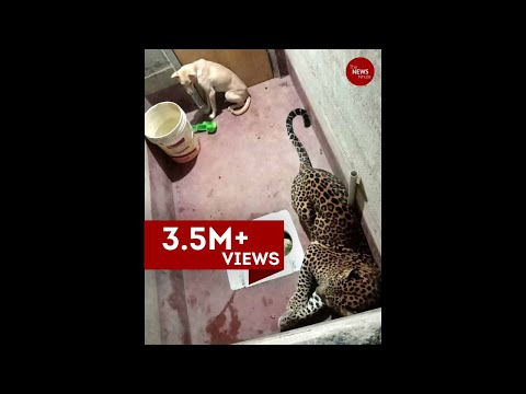 Dog trapped with leopard inside toilet in Karnataka for at least 7 hours