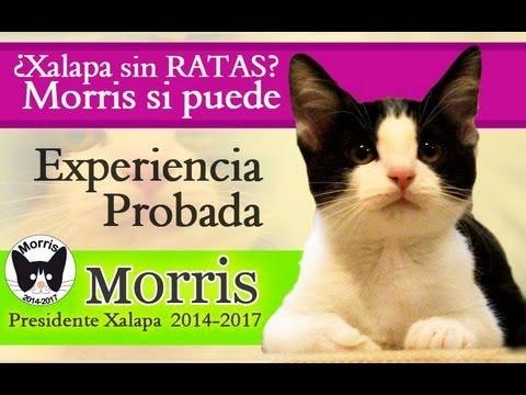 messico-xalapa-un-gatto-candidato-come-sindaco-per-protesta-168