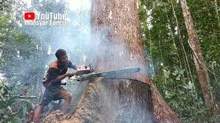 Video Pohon Bangkirai Ini Menyemburkan Air Begitu Lama MP3, 3GP, MP4, WEBM, AVI, FLV Januari 2019
