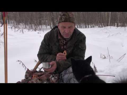 как ловить рысь на капкан