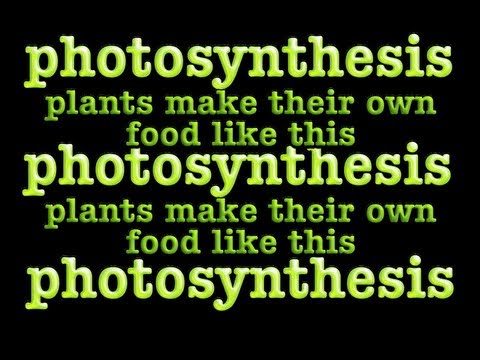 Photosynthese Lied: Chloroplasten und Chlorophyll