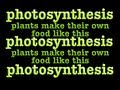 chloroplasts and chlorophyll