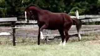 ESPN E:60 - Inside the Black Market Horse Meat Trade