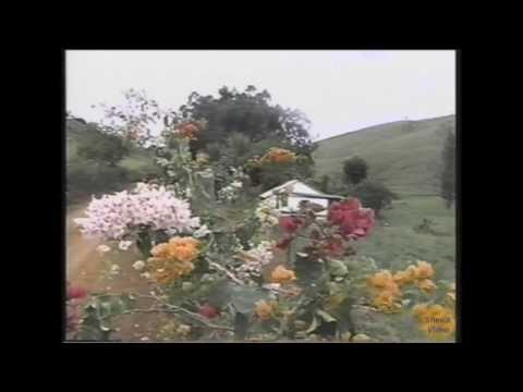 Sítio da Tia Nelza em Rodeiro, MG - 1999