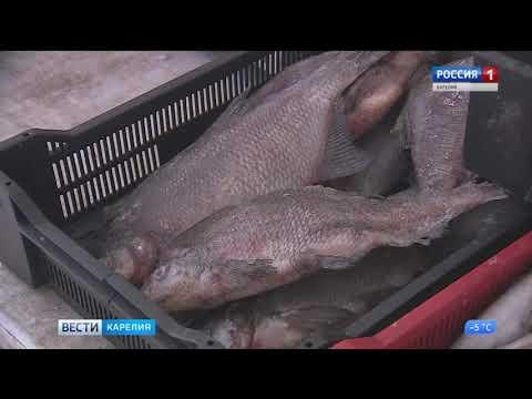 Заголовок: Рейд по стихийным торговым точкам прошел в Петрозаводске