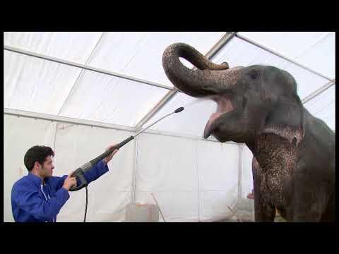 Les éléphants de la famille Joy Gaertner à Monaco