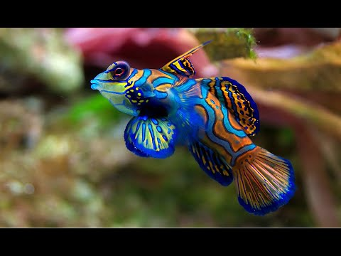 LOS COLORES DEL AGUA - Documental Naturaleza HD 1080p - Grandes Documentales