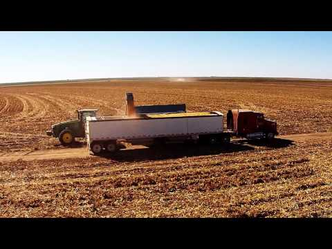 Coldwater Corn Harvest