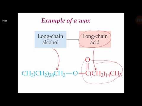 General Biochemistry _ lipids 1 -  الكيمياء الحيوية العامة _الدهون ١