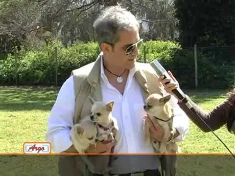 Argo, l'uomo e il Cane – Il Chihuahua