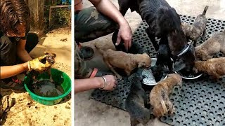 Tar-coated puppies get second chance! by The Humane Society of the United States