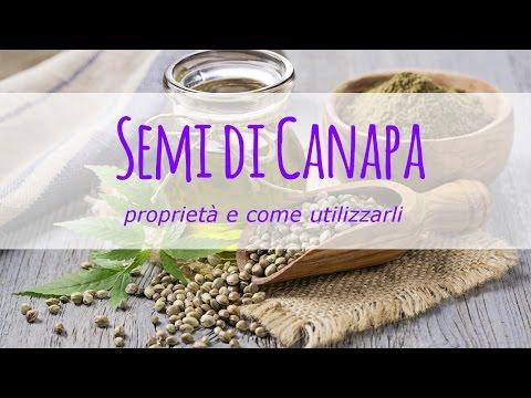 semi di canapa: utilizzo e proprietà benefiche