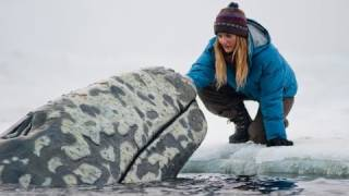Nonton Big Miracle   Trailer Film Subtitle Indonesia Streaming Movie Download