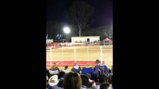 Fernvale Australia  city photo : Fernvale stampede1~aus