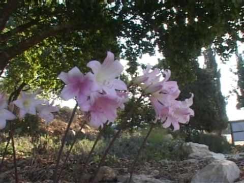 Gyere velünk Izraelbe Éjféli Kiáltás Misszió Izraeli zarándokútja