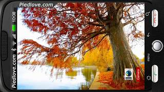 Autumn Pond Willow View HD YouTube video