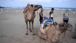 Asilah Morocco  City pictures : Asilah, MOROCCO