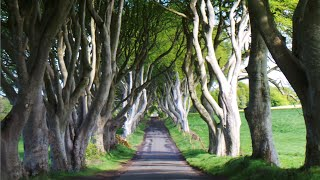 The Dark Hedges have been included in a list of the 12 best road trips in the UK and Ireland, compiled by the website www.continentalroadtrip.com.  This road is so beautiful that it was used in the Game of Thrones TV show.  These beech trees were originally planted by the Stuart family in the eighteenth century and are considered the most photographed natural phenomena in Northern Ireland.I travelled from Brisbane, Australia to check out this road and the other wonderful attractions that Ireland has to offer.  What other roads are worth the drive?If you want to see some of my holiday photos, I've put them up on Instagram.  https://instagram.com/rosy_kia/Music - Somewhere Sunny (version 2) - Kevin MacLeod.For any products/services that are mentioned or are featured in this video, they are purchased myself.Any statements or opinions stated are my own.This video is not sponsored.