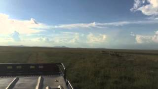 'Peace' of Serengeti