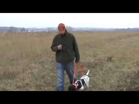 Free Hunting Dog Training Videos – Heel Part 1