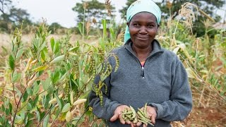 http://www.greenpeace.org/africa/en/campaigns/Ecological-Farming-in-Africa/ClimateResilience/ Farmers in Kenya are dealing with the challenges created by a c...