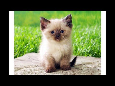 augurio speciale per chi ama i gatti! mici compilation!