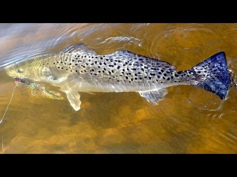 Fly Fishing St. Augustine Florida