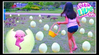 Kids Family Fun trip Farm Beach Surprise EGG HUNT Challenge  Little Live Pets SURPRISE Chicks Search for Golden EggThank you Moose Toys for sponsoring this video.Get egg-cited - your Surprise Chick is about to hatch! The Little Live Pets Surprise Chick hatches and hops just like a real chick! Hear it tap and chirp inside the egg then watch in amazement as it hatches out! Will it hatch quick or will it hatch slow? Once your chick has hatched watch it hop about! It's so cute and makes real chick sounds. The more you pet your chick the more it will sing! Which chick will hatch for you?! There are five chicks to find - Patty the Party Chick, Blossom the Daisy Chick, Tilly the Dancing Chick, and Beaky the Rainbow Chick.Will you find the lucky Cheeky Limited Edition Golden Egg? You just won't know till you say hello! You can re-hatch your chick over &  over for endless fun!Features:Hatching fast or slow, which surprise chick will you getHear fun chirping and tapping sounds from inside the eggWatch in amazement as your chick hatchesThe more you pet your chick the more it loves to singCollect all four and watch out for the Limited Edition golden chickRequires (3) button cell batteries (included)Includes (1) Surprise Chick per pack, styles may vary♥ Please Subscribe! https://www.youtube.com/c/tianahearts♥ My Twitter: http://twitter.com/TianaHearts♥ My Instagram: http://instagram.com/TianaHearts~~~~~~~~~~~~~~~~~~~~~~~~~~~~~~~~~~~~~~~~~~~~Hi!! Welcome to my channel, my name is Tiana (TT). Mommy and I make videos on stuff that we love and enjoying doing. Here you will find DIY's, toy reviews, vlogs, playing with toys etc..This Channel is family and kid friendly :) Please don't forget to subscribe so you'll know when a new video is posted. If you have any video suggestions let me know :) Thank you for your support  xoxox Tiana & Mommy HeartsToy in other Languages: खिलौने, brinquedos, ของเล่น, اللعب, igračke, đồ chơi, oyuncaklar, leksaker, juguetes, играчке, игрушки, jucării, тог