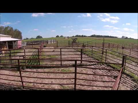 Padgett Cattle Farm, Carroll County