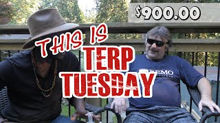 Terp Tuesday with Jonny B and Horatio by Urban Grower