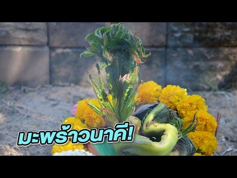 เลขเด็ดทั่วไทย 1 ธ.ค. 59 | 30-11-59 | ข่าวใส่ไข่ | ThairathTV