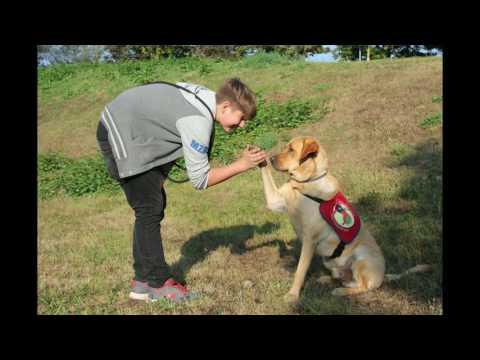 Therapiehund Fido & Nico