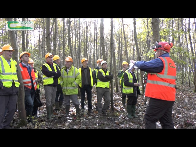 Forestry in Teagasc