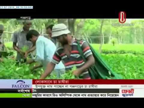 Tea producers incurring losses (27-07-2016)