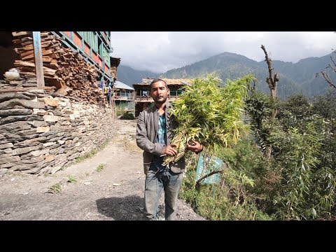 INDIA'S HIDDEN WEED VILLAGE | Malana, Parvati Valley (2017)