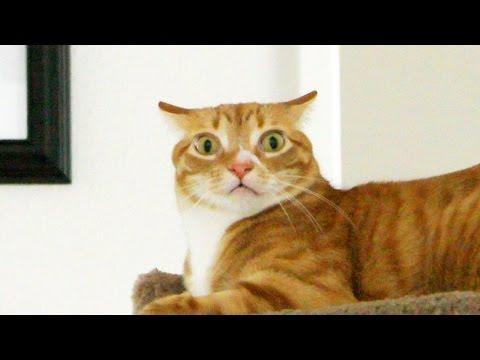 le emozioni dei gatti