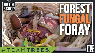 Forest Fungal Foray! [#TeamTrees] by The Brain Scoop