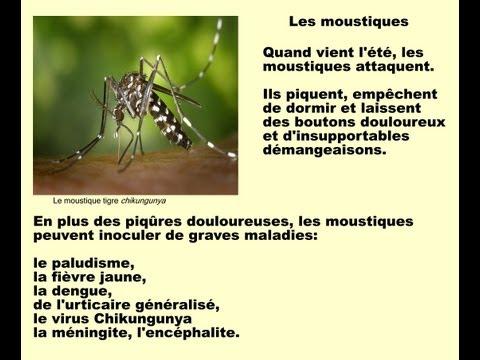 comment traiter piqure de moustique