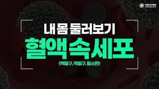 혈액 속 세포- 백혈구,적혈구,혈소판  미리보기