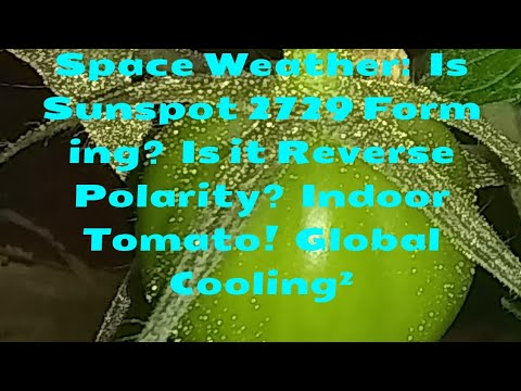 Space Weather:  Is Sunspot 2729 Forming?  Is it Reverse Polarity?  Indoor Tomato!  Global Cooling2_A héten feltöltött legjobb nap videók